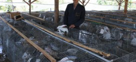Trang trại thỏ mang về tiền tỷ mỗi năm